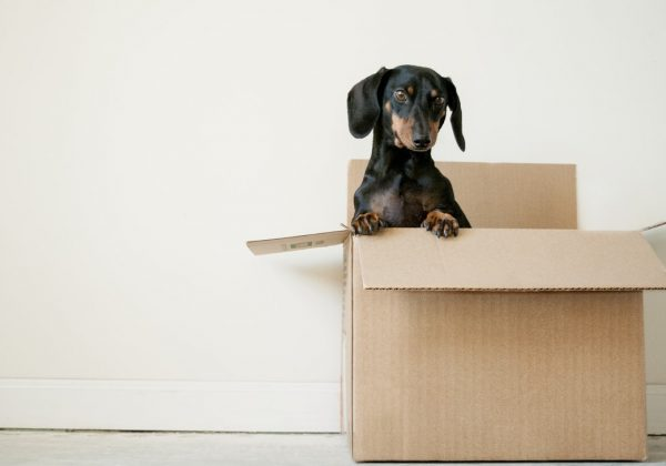 How to Declutter and Downsize Your Home Prior to a Move